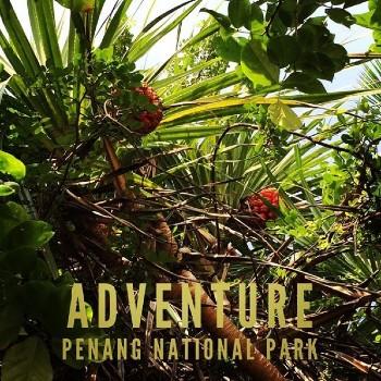 植物 マレーシア
